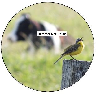 Dümmer Naturblog